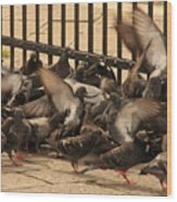 Pigeons In Venice Wood Print