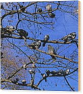 Pigeons Perching In A Tree Together Wood Print