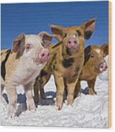 Piglets In Snow Wood Print