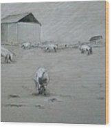 Pigs And Barn Wood Print