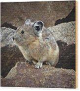 Pika - Weminuche Wilderness - Colorado Wood Print
