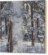 Pike National Forest Snowstorm Wood Print