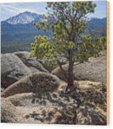 Pikes Peak Bristlecone Wood Print
