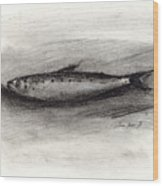 Pilchard Drawing Wood Print