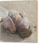 Pile-up On The Beach Wood Print