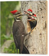 Pileated #30 Wood Print