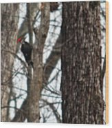 Pileated Billed Woodpecker Wood Print