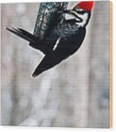 Pileated Billed Woodpecker Pecking 6 Wood Print