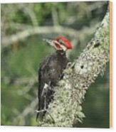 Pileated Perch Wood Print