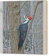 Pileated Woodpecker - Dryocopus Pileatus Wood Print