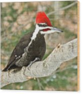 Pileated Woodpecker 6073 Wood Print