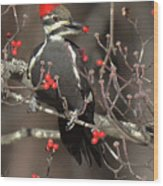 Pileated Woodpecker Lunch Wood Print