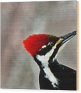 Pileated Woodpecker Up Close Wood Print