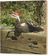 Pileated Woodpecker1 Wood Print