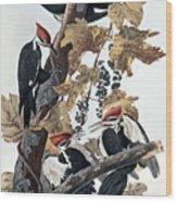 Pileated Woodpeckers Wood Print