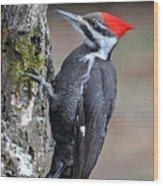 Pileated Woopecker  Female Wood Print