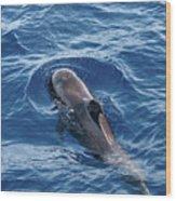 Pilot Whale 2 Wood Print