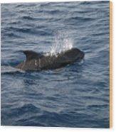 Pilot Whale 6 Wood Print