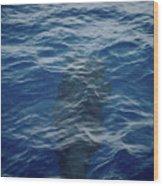 Pilot Whale 8  Wood Print