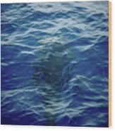 Pilot Whale 9 The Mermaid  Wood Print