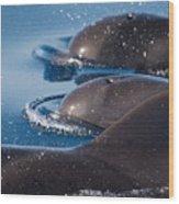 Pilot Whales 1 Wood Print