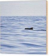 Pilot Whales 2 Wood Print