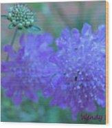 Pin Cushion Flower Wood Print