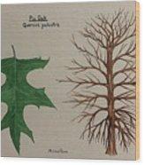 Pin Oak Tree Id Wood Print