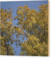 Pin Oaks In The Fall No 1 Wood Print