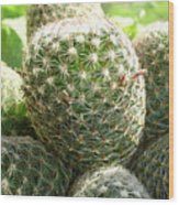 Pincushion Cactus Wood Print