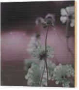 Pincushion Pink Invasion  Wood Print