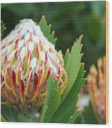Pincushion Protea Wood Print
