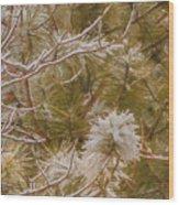 Pine And Bitter Sweet Vine Wood Print