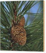 Pine Cone 2 Wood Print