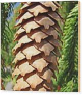 Pine Cone Art Prints Pine Tree Artwork Baslee Troutman Wood Print