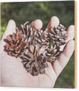 Pine Cones Hand Wood Print