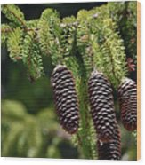 Pine Cones On The Bough Wood Print