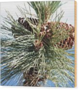 Pine Cones Over Lake Tahoe Wood Print