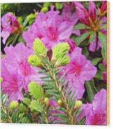 Pine Conifer Art Print Pink Azaleas Flower Garden Baslee Troutman Wood Print
