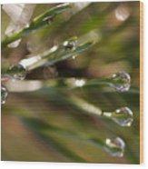 Pine Drops Wood Print