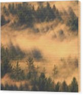 Pine Forest And Fog Wood Print