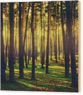 Pine Forest In La Boca Del Asno-segovia-spain Wood Print