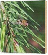 Pine Fresh Wood Print