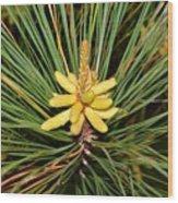 Pine In Bloom Wood Print