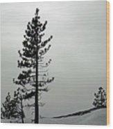 Pine In Snow Wood Print