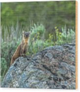 Pine Marten With Attitude Wood Print