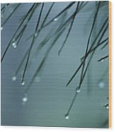 Pine Needle Raindrops Wood Print