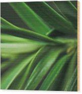 Pine Needles Wood Print by Ryan Kelly