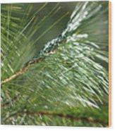 Pine Needles Series 1 Wood Print