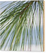 Pine Needles Series 3 Wood Print